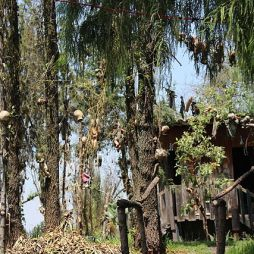 isla_de_las_munecas_desde_los_canales