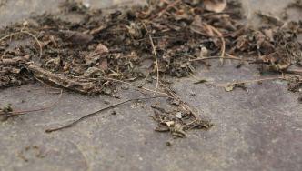 leaflitter