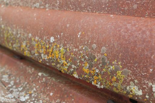 rust32