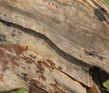 wood10