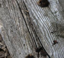 wood22