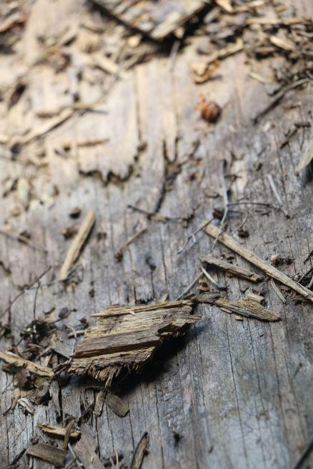 wood23