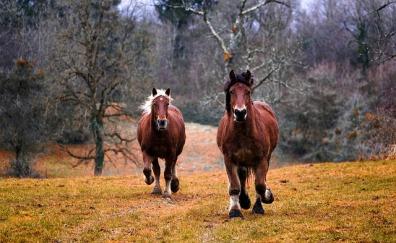 horses-1984977_640.jpg