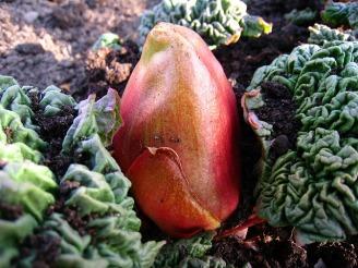 rhubarb-140865_640.jpg