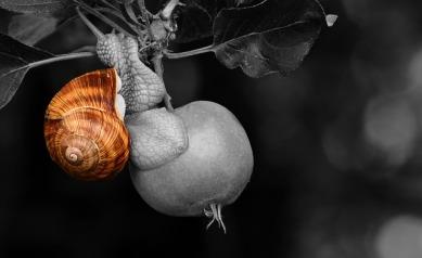 snail-2485950_640.jpg