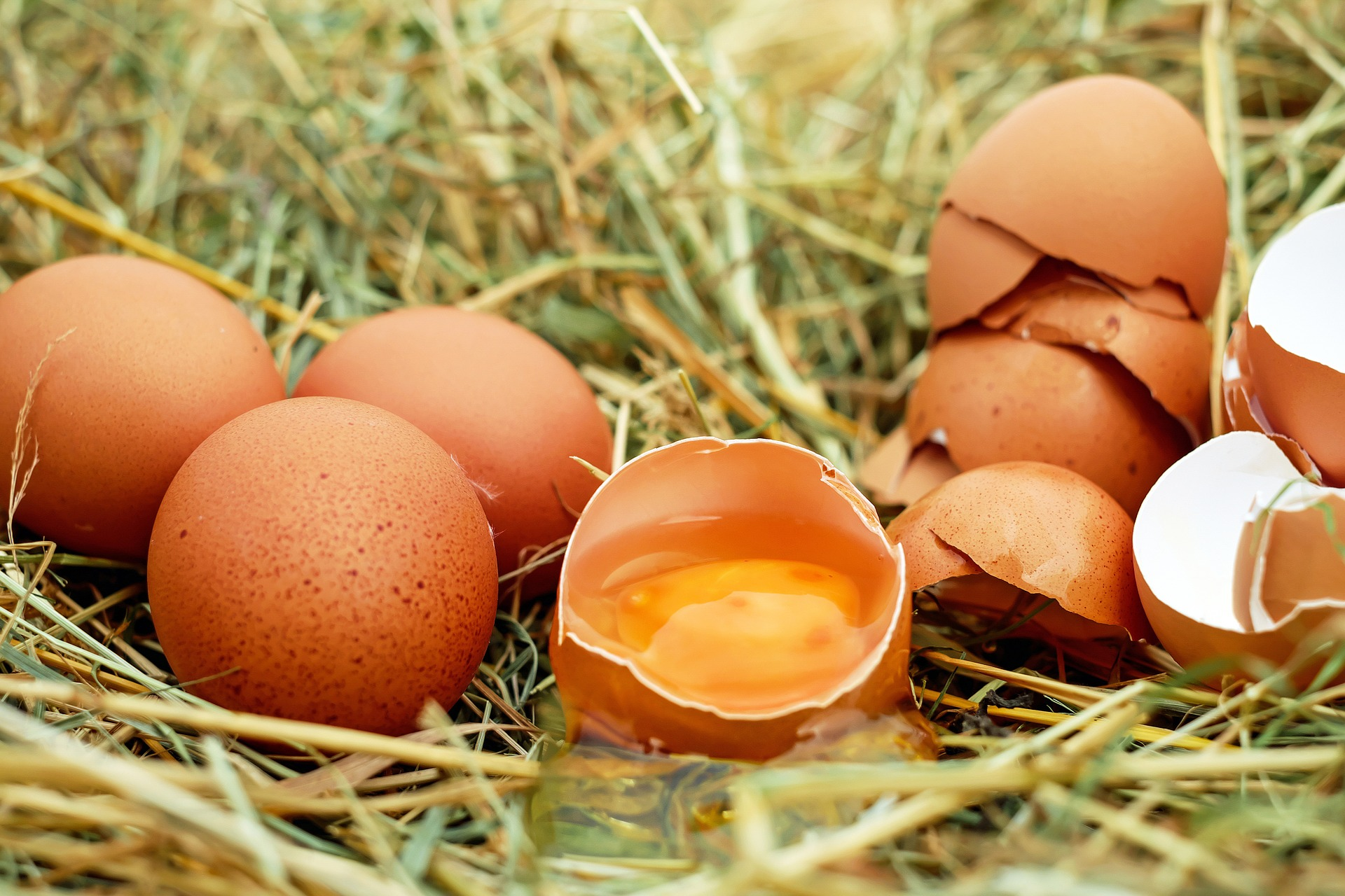 Eggshells and Cornmeal – Protection and Prosperity Magick at Home and in Ritual