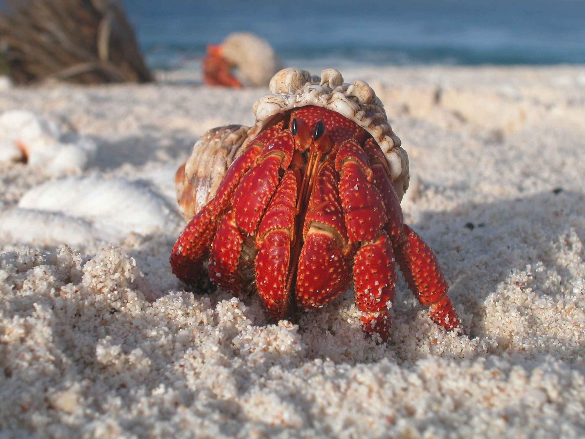 Hermit Crabs in Florida